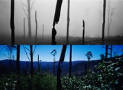 The top image was taken just after the Victorian Black Saturday bushfire and the below image, two years later. (Andrew Quilty)