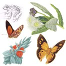 Natural history art. Frog by Nadia Waters; gum blossoms by Bronwyn King; butterflies by Andrew Howells