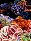 Crocheted corals are a representation of a hyperbolic plane and now on display in Victoria. (Photo: Katherine Nightingale)