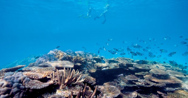 Snorkellers at Fitzroy Reef Lagoon. (Photo: Courtesy of Tourism Queensland)