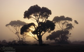 Images of Australia: Misty sunrise, Kangaroo Island, South Australia
