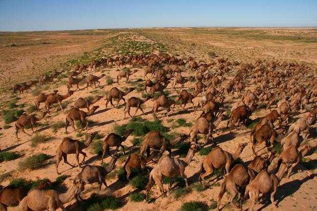Camel Instant Win