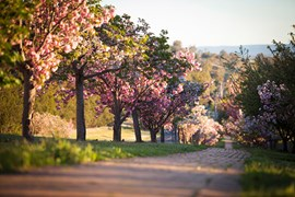 Beautiful and serene, the Japanese Gardens in Cowra, NSW. (Credit: Ben Ey)