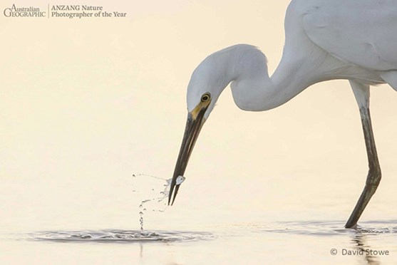 People's Choice winner: <em>Little Egret (Egretta garzetta), little fish</em> (Credit: David Stowe)