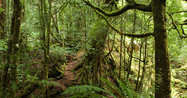 an introduction to the geography of rainforests in australia Geography of australia coordinates north: tropical climate, varied between tropical rainforests (partly as a result of the introduction by european.