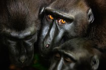 The Glance, by Jami Tarris / Veolia Environnement Wildlife Photographer of the Year 2012