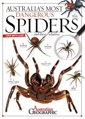 Australia's Most Dangerous Spiders