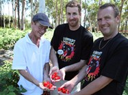 Neil, Mark and Marcel show off the world's hottest chilli - the Trinidad Scorpion Butch T. (Credit: The Chilli Factory)