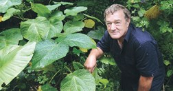 Researcher Les Moore, alongside a Gympie-Gympie stinging plant. (Photo: Brian Cassey)
