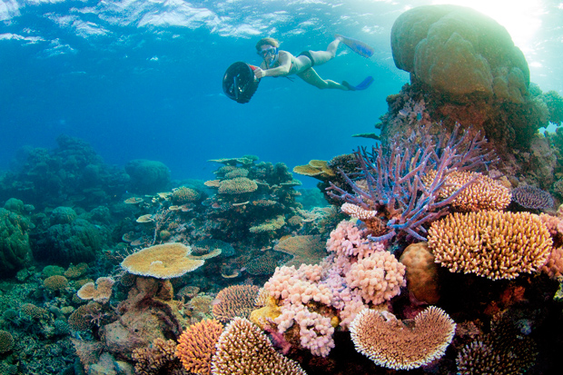 Top snorkelling spots in australia australian geographic - Best place to dive the great barrier reef ...