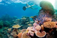 the Great Barier Reef is one of the best places for snorkelling in Australia. (Credit: Tourism Queensland)