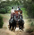 This re-created 14-seat Cobb & Co. caoch is a way tourists can experience life as it was in the old outback. (Dean Saffron)