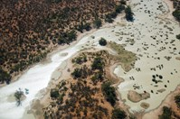 The Paroo River in northern NSW inundated up to 8000sq. km of ephemeral floodplain habitat in 2008. (Credit: Andrew Gregory)