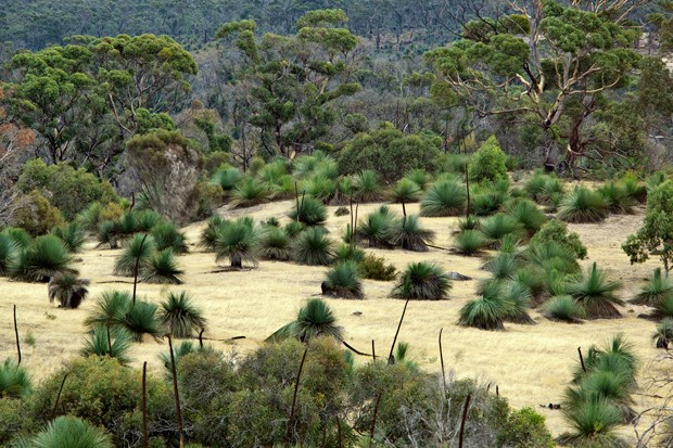 Kangaroo island where the wild things are image14 for Landscapers adelaide western suburbs