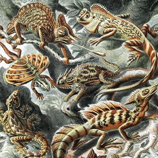 Lizards by Ernst Haeckel, 1904