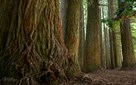 Images of Australia: Otway Forest, Victoria