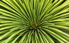 Images of Australia: Grass tree