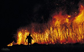 Images of Australia: Burning canefield