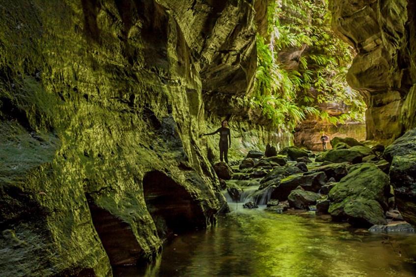 beautiful sounds wollemi national park australia