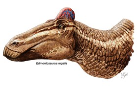 A duck-billed dinosaur now pictured with a rooster-like comb. (Credit: Bell, Fanti, Currie, Arbour/Current Biology)