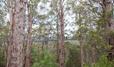 The Valley of the Giants Treetop Walk in southern Western Australia.