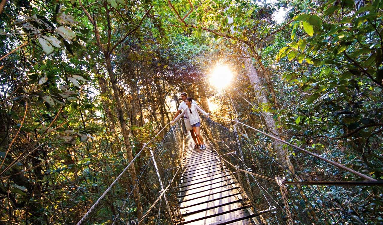 daintree & Australiau0027s top 10 treetop walks - Australian Geographic