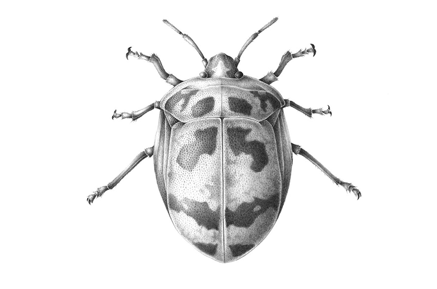 insects natural history marshall pdf