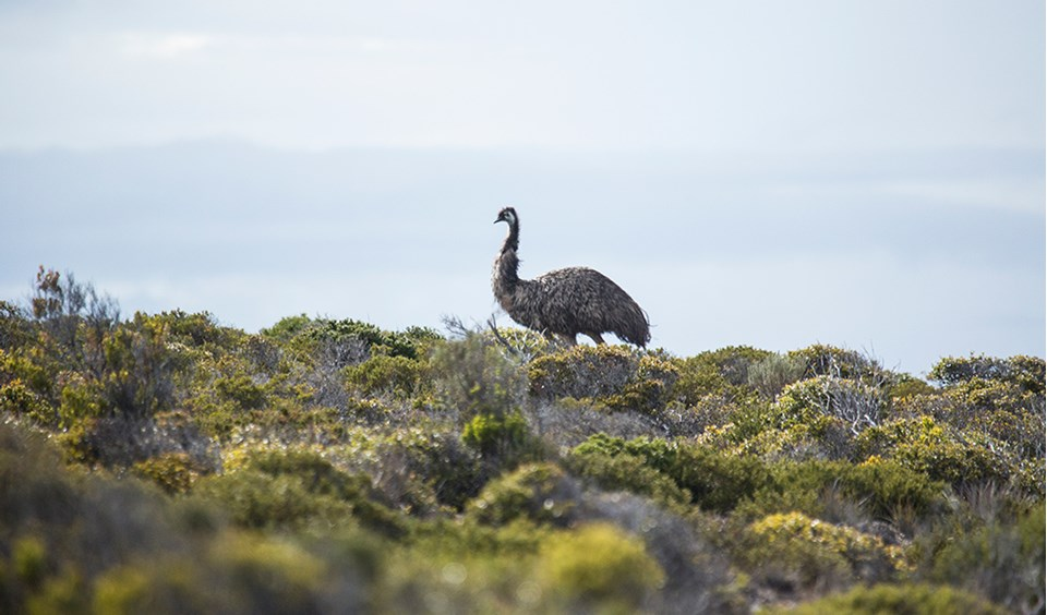 Eyre Peninsula Australia  city photos : Eyre Peninsula South Australia 17 Australian Geographic