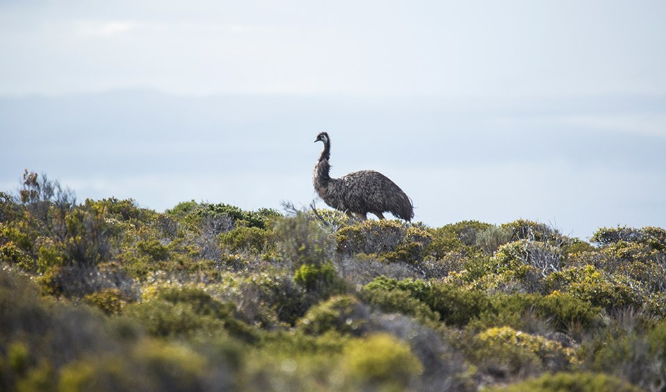 Eyre Peninsula Australia  City pictures : Eyre Peninsula South Australia 17 Australian Geographic