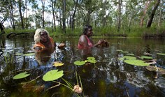 Senior Warddeken landowner Mary Kalkkiwara (left) and Merrill Namundja aren't afraid to get wet as they gather water tuber 'ankodjbang' in one of the creeks running off the Arnhem Land Plateau, part of the Warddeken IPA.
