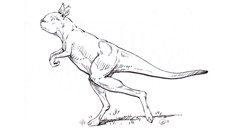 An artist's impression of a giant, extinct, short-faced kangaroo.