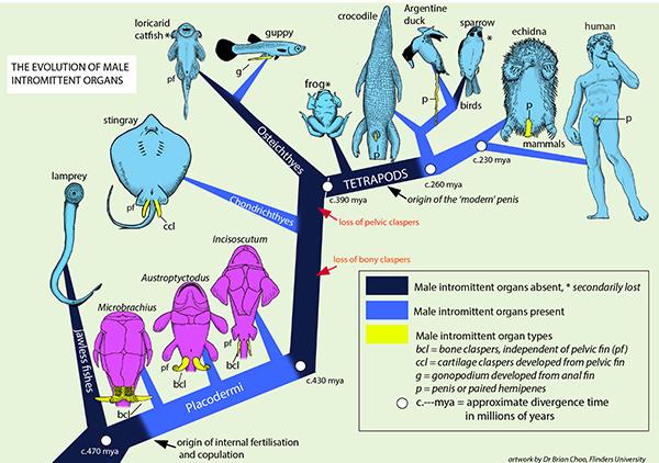 Diagram of sexual intercourse — img 8