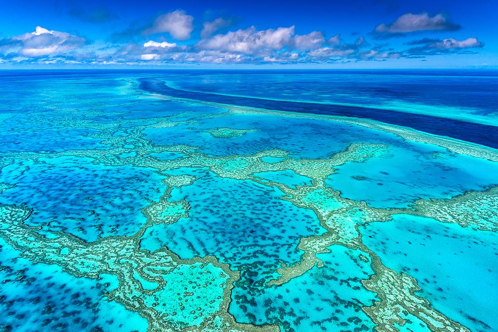 Reef Calendar Wallpaper : Reader photo hardy reef australian geographic