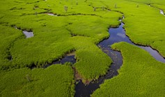 Water flows into the marshes, creating green islands of flourishing plants.