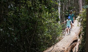 D'Aguilar National Park has walking tracks for the whole family