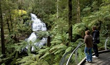 A range of pleasant day walks can be found at the Otways in Victoria