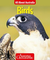 All About Australia: Birds