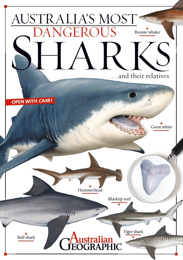 Australia's Most Dangerous Sharks