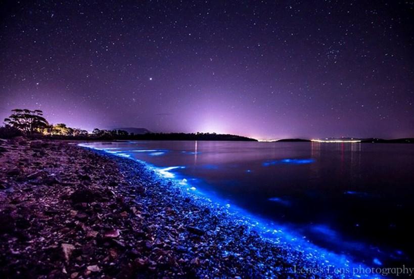 Bioluminescence Tasmania