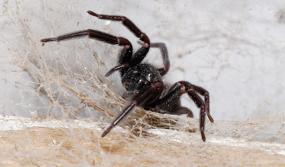 What to do if you find a spider in your home australian for How to stop spiders coming in your house