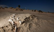 The eroding Willandra Lakes lunettes are littered with fossils and archaeological artefacts such as this skeleton.