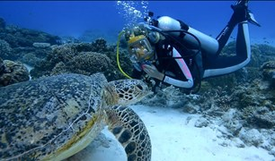 Diving with a turtle on Lady Eliot Island.