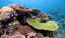 Far Northern Great Barrier Reef. Reefs around the world are threatened by climate change. A new study shows that some corals have the genes to adapt to warmer oceans.