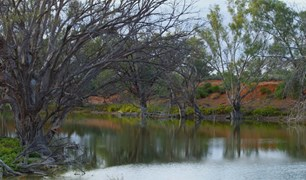 The majestic Macquarie River's tranquility belies its importance to the thousands of living creatures in and around it
