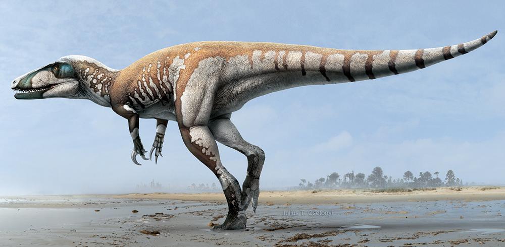 Lightning_ridge_claw_new_dinosaur.jpg