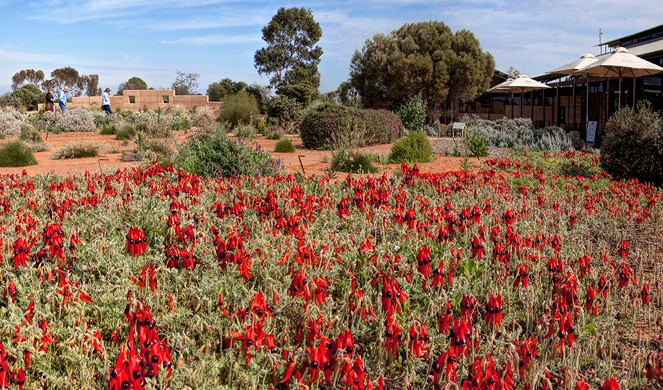 Australian Arid Lands Botanic Garden Australian Arid