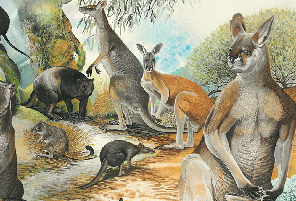extinction of australian megafauna essay Climate not to blame for megafauna extinction in australia monday, 1 february 2016 new research led by the university of adelaide has found no relationship between sixteen megafauna extinctions in australia and past climate change, suggesting humans were having negative impacts on the ecosystem as long as 55,000 years ago.