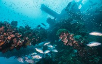 From a tragic maritime disaster south-east of Townsville, a vibrant reef was born at the wreck of SS Yongala.