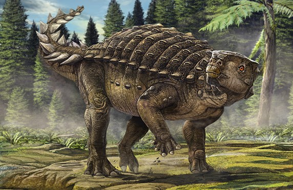 Kunbarrasaurus, the dinosaur formerly known as Minmi.