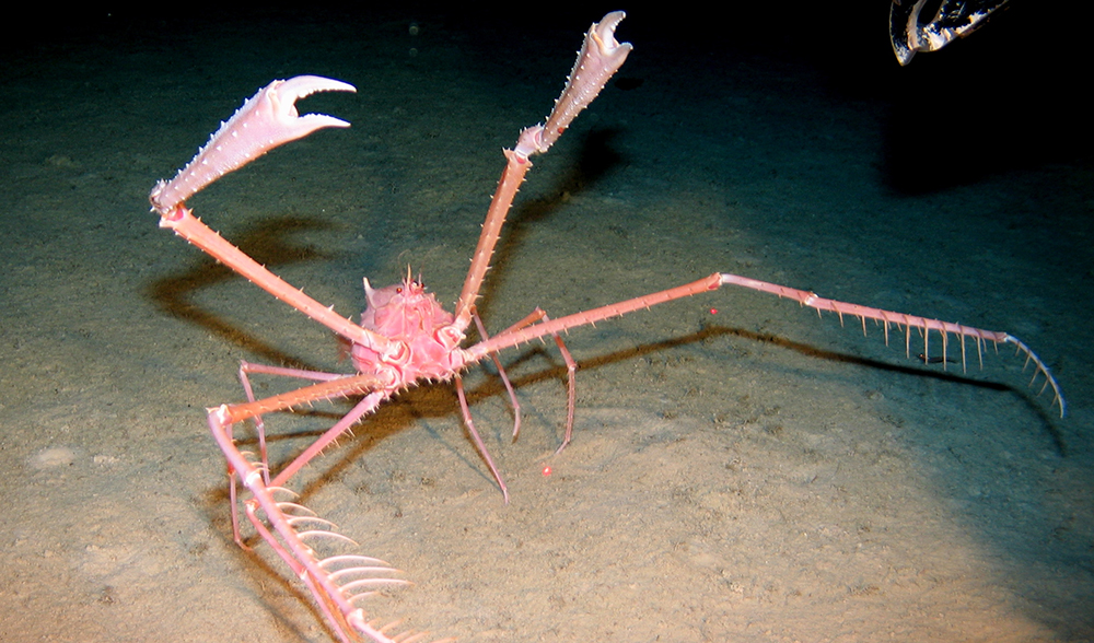 ROV coral sea